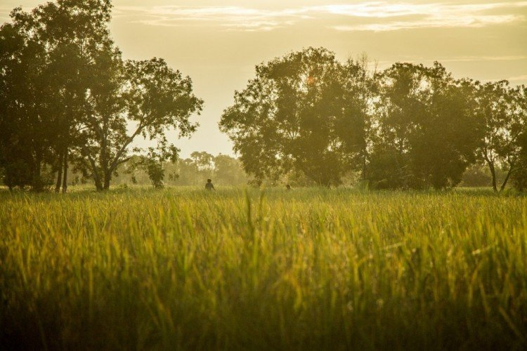 farmstay malaysia rice fields