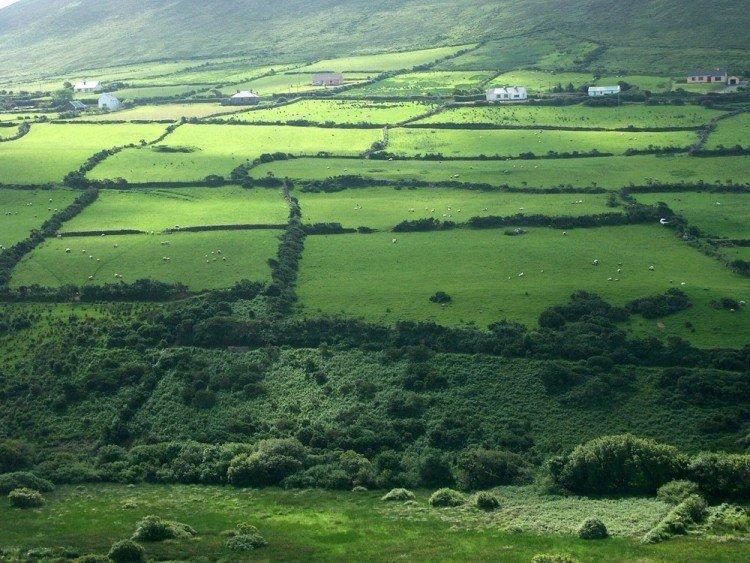 Farm fields in Ireland