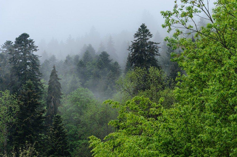 Black forest Germany, Badem-Wurttemberg