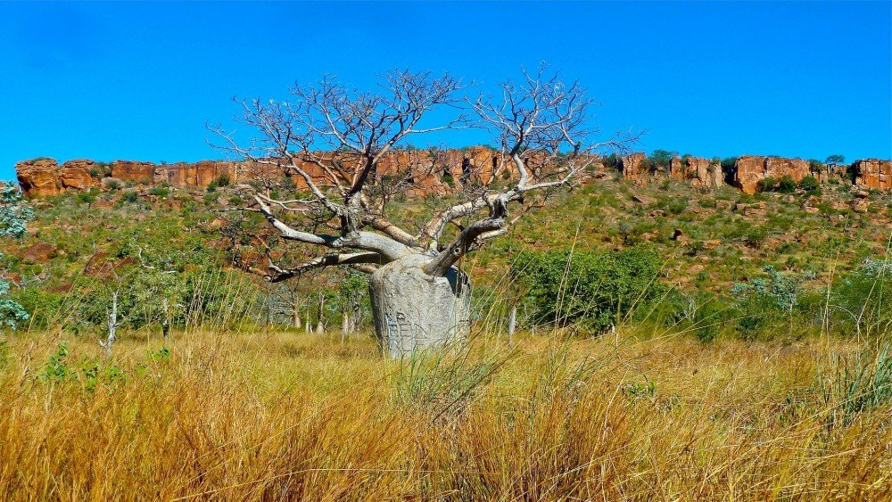 Queensland Outback farmstays