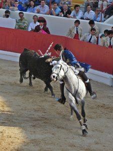 bullfight in portugal