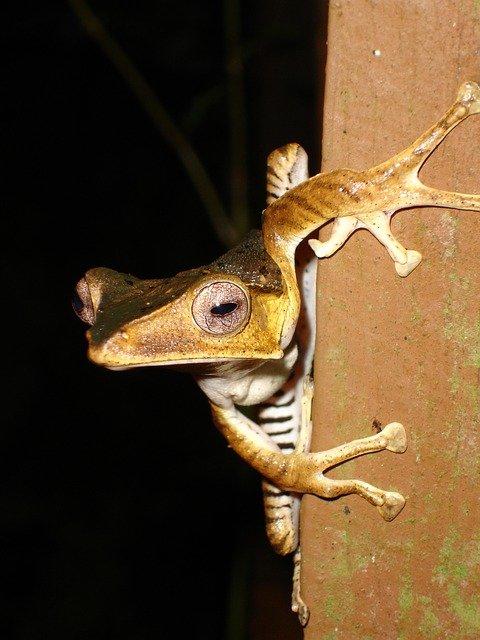 farmstay malaysia wildlife jungle treks