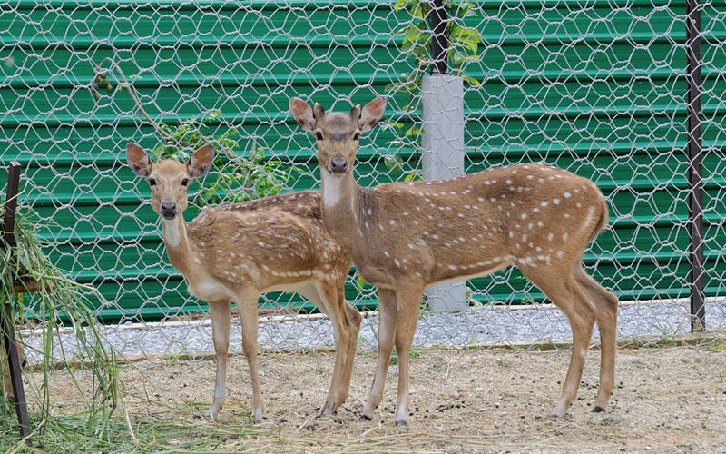 deer11181