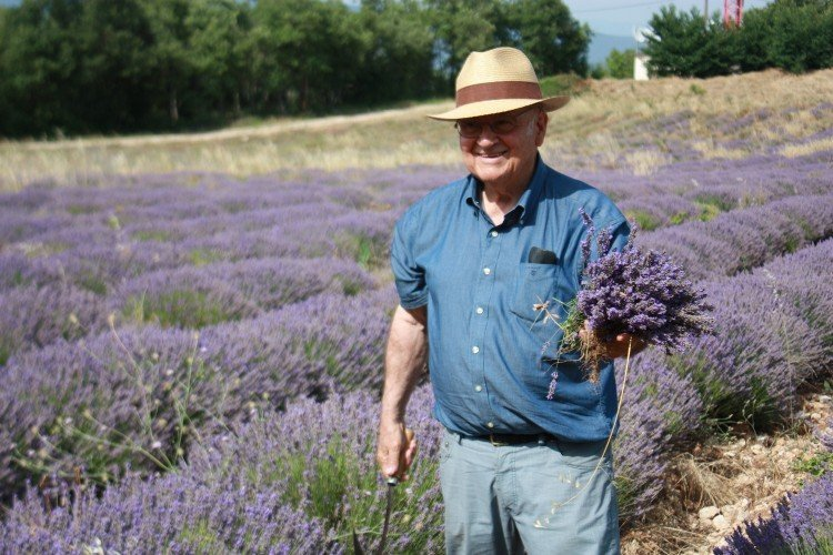 Lavender Fields Provence France 2019 | When, Where & Where to Stay