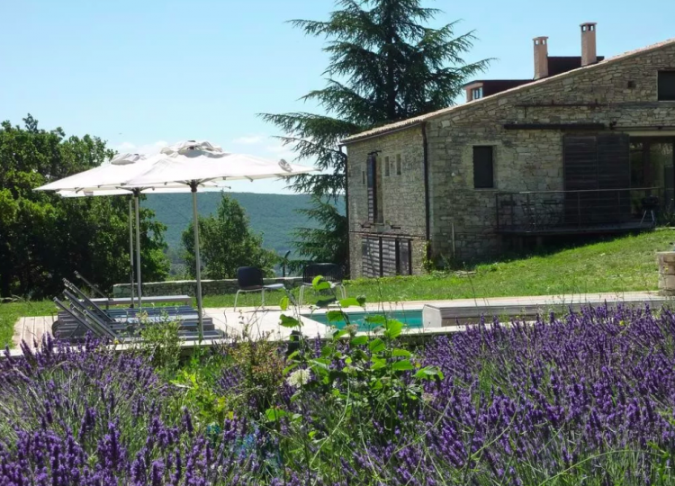 Lavender Fields Provence France 2019   When, Where & Where