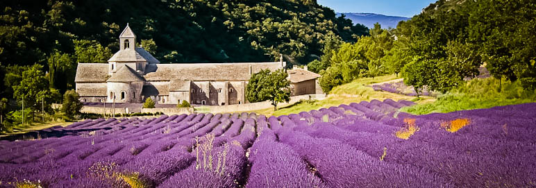 Notre-Dame de Senanque Monastery & lavender fields in Luberon, Provence.
