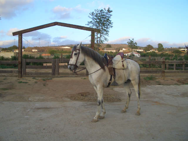 organic-farm-stay-with-horse-riding-lessons-andalucia