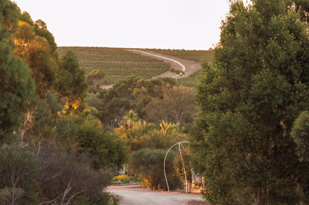 barrossa-valley-farmstay-near-adelaide