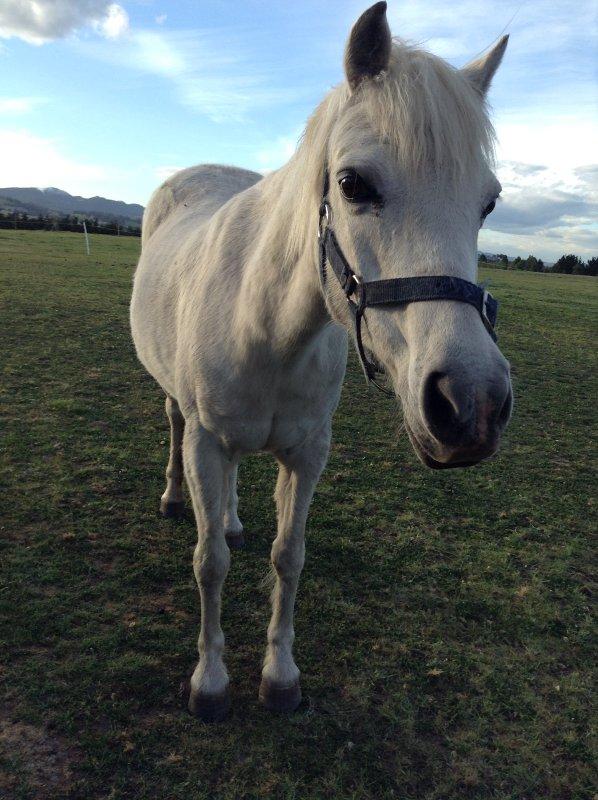 horse-agritourism-tasmania
