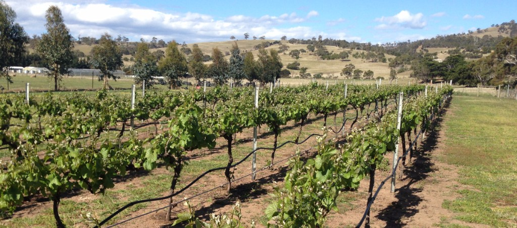 vineyard-hotel-farm-richmond-tasmania