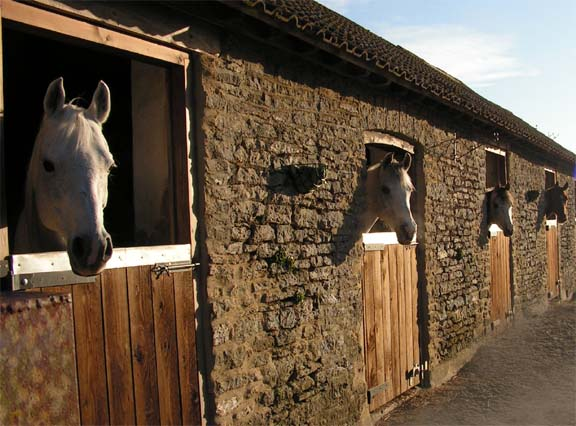 stables-toomer-farm-stay-somerset