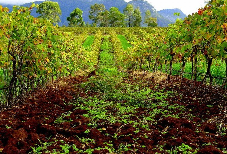 THE 10 BEST Farm Stays in NSW - Hunter Valley & Kangaroo Valley