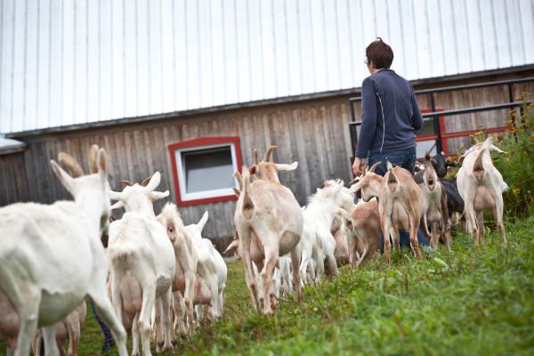 Aagje-et-chèvres-e1445453506397-1