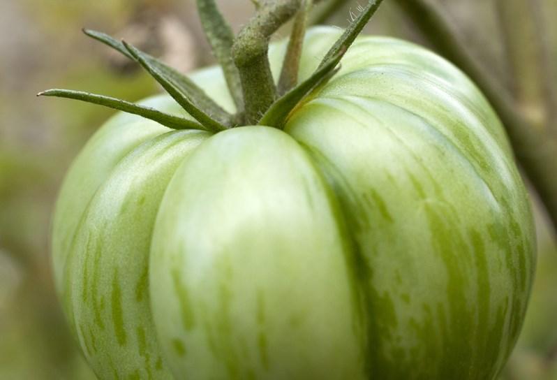 Crosby-Garden-Tomato