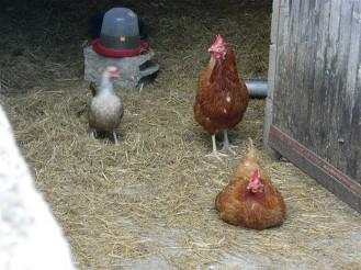 farmstay4
