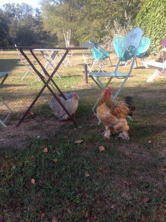 jolies-poulettes