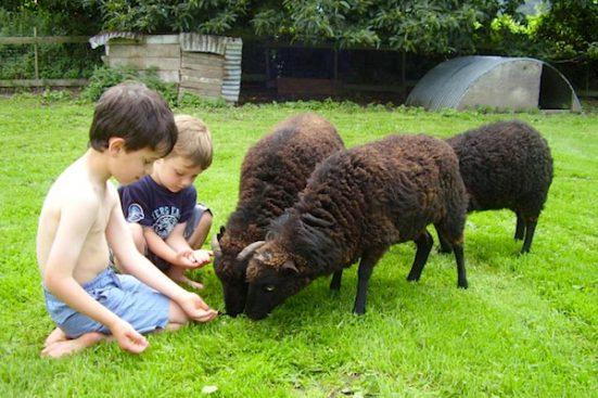 P8230054-boys-with-sheep-551x367