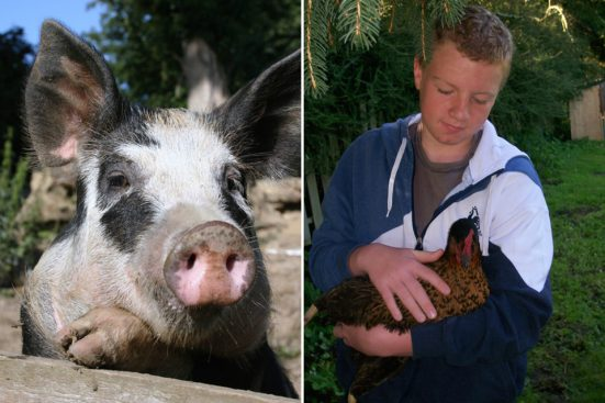 pig-and-boy-with-hen-551x367